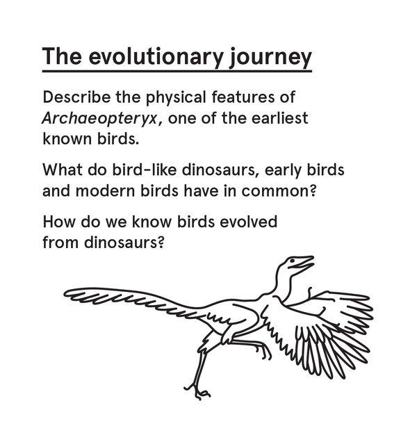 ED_Dino_S - Archaeopteryx