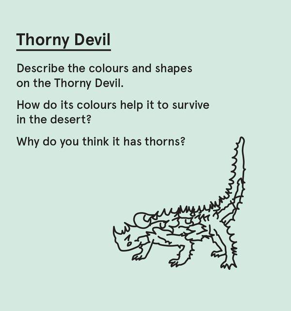 ED_WP_P - Thorny devil