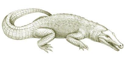 Australia's extinct animal, Tingamarra Swamp Crocodile