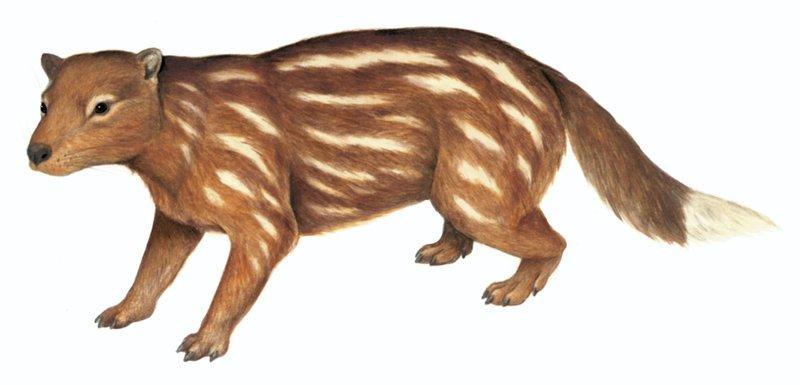 Australia's extinct animal, Tingamarra (Tingamarra porterorum)