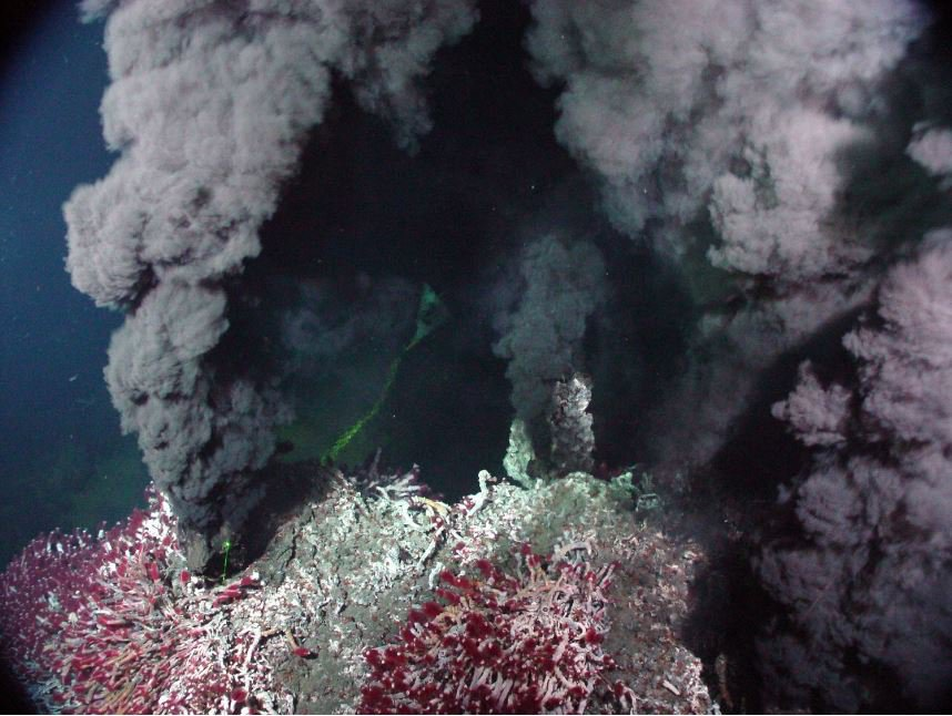 Tubeworms growing near hydrothermal vents