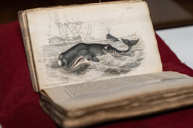 Weird Whales books