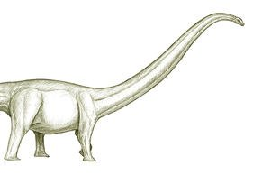Western Australian Giant Sauropod
