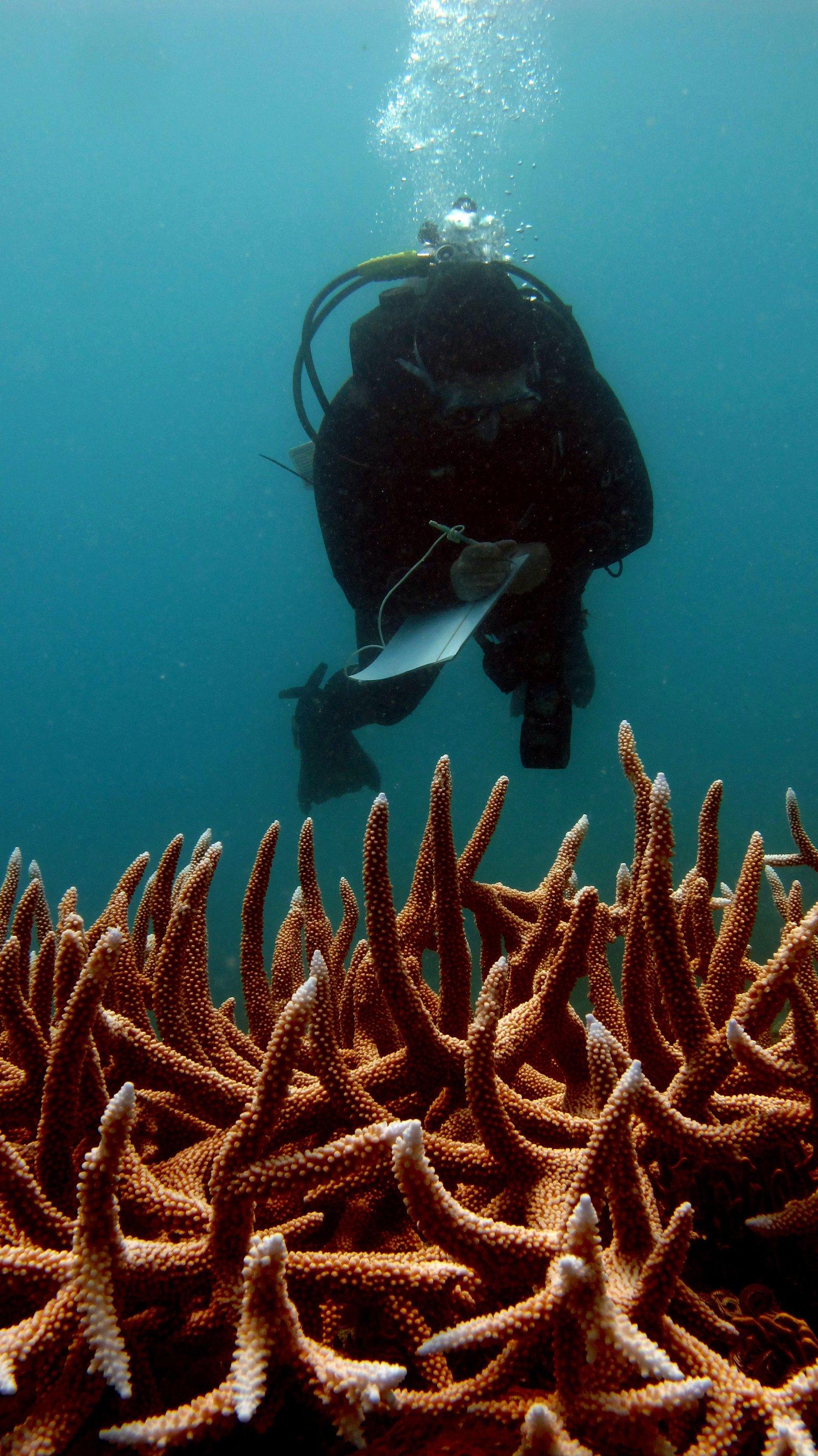 Zoe surveying coral biodiversity