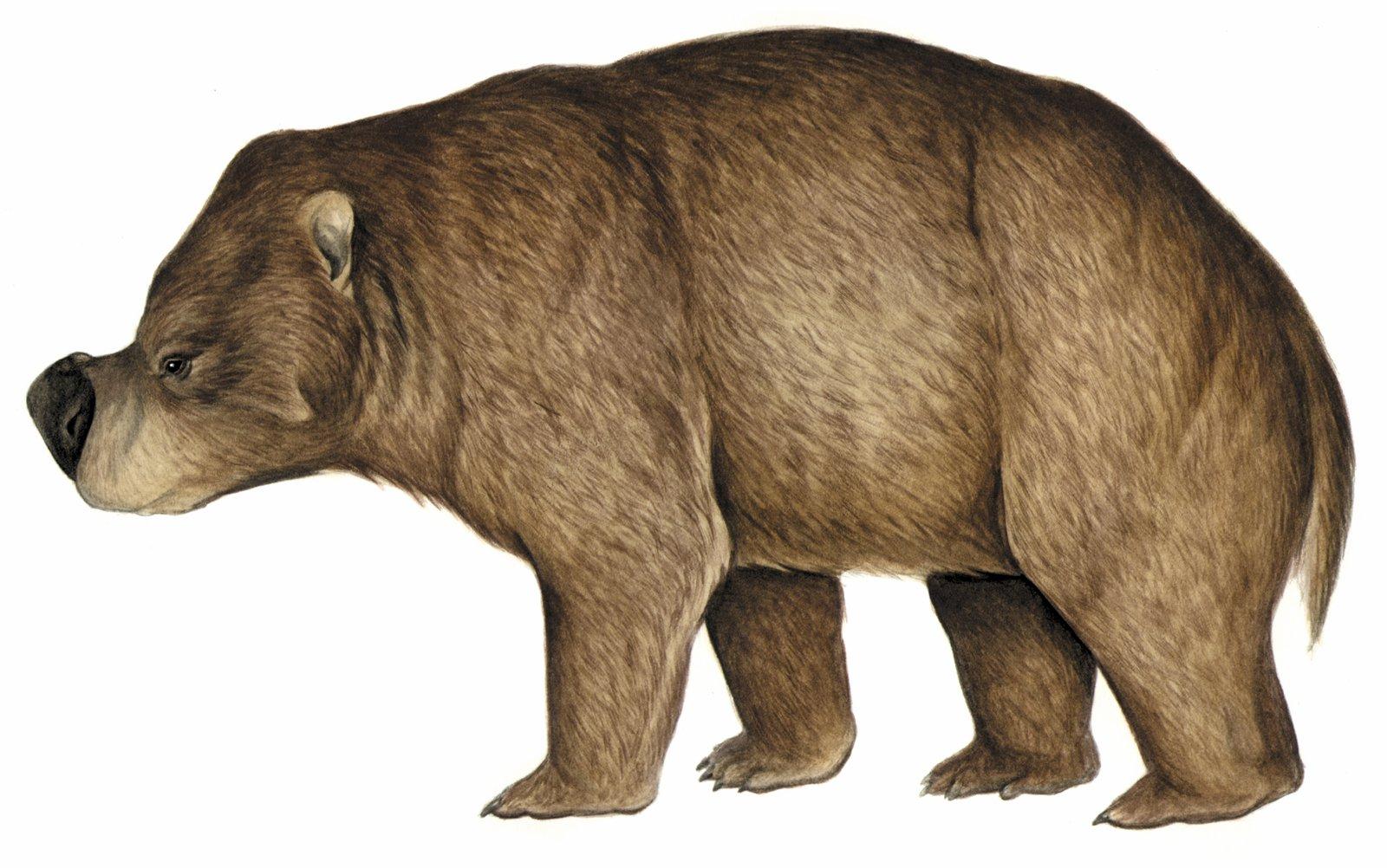 Zygomaturus