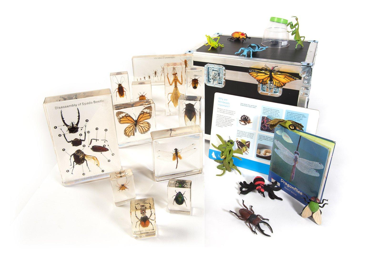 Minibeast Museum in a Box