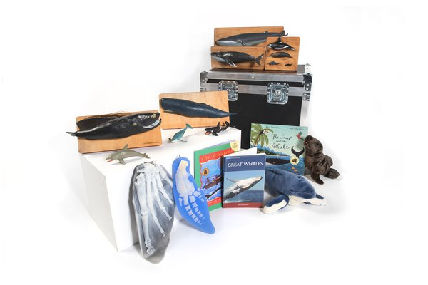 Marine Mammals Museum in a Box