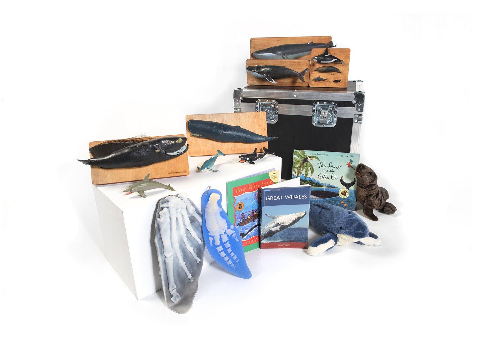 Marine Mammals Museum in a Box