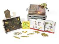 Frogs Museum in a Box