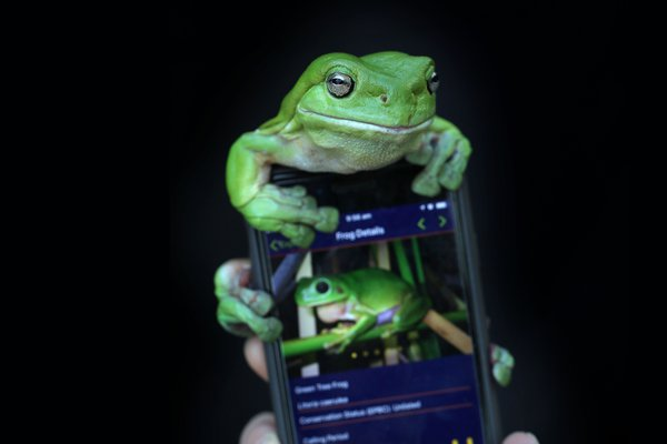 Frog sitting on a mobile phone