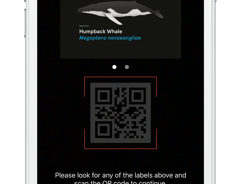 Scan a QR code screen on the Whale Trail game