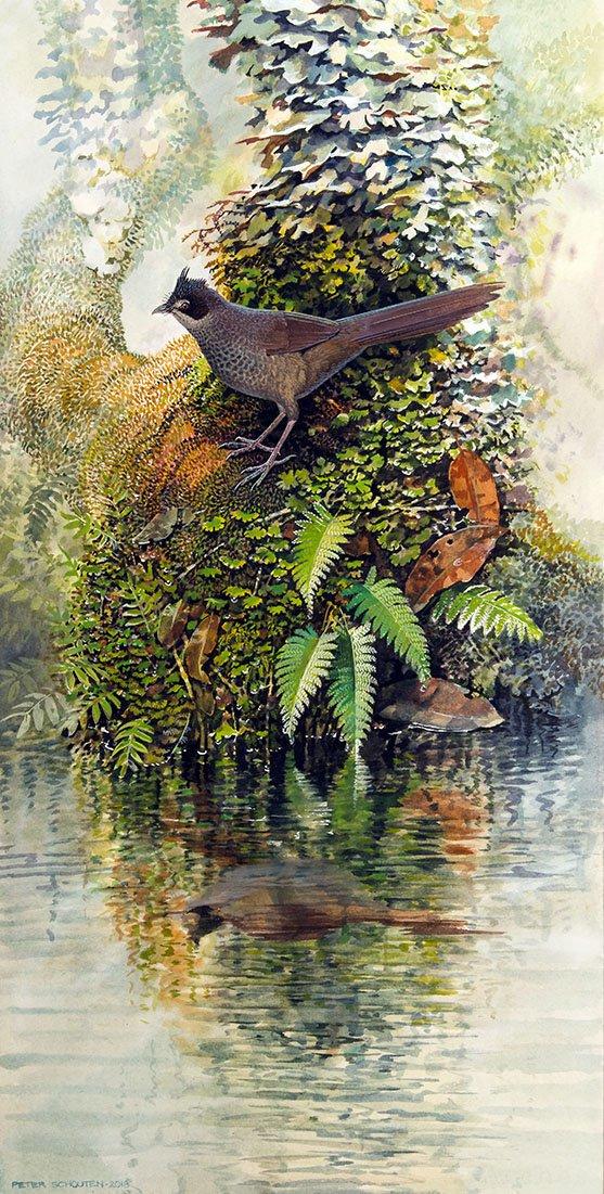 artistic reconstruction of the extinct Walter's Bristlebird Dasyornis walterbolesi