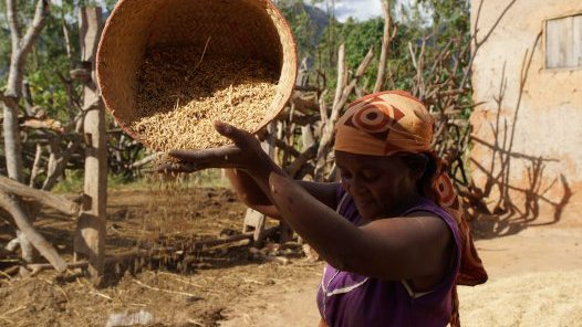 Madagascar 2012 - sifting grain