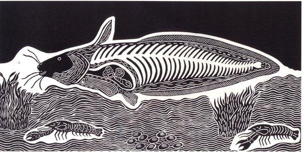 catfish by Badger Bates