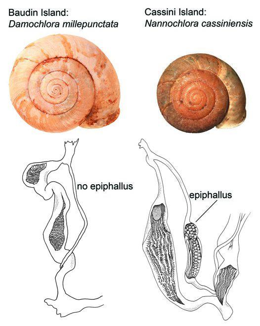 Damochlora millepunctata and Nannochlora cassiniensis