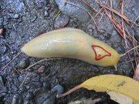 Red Triangle slug