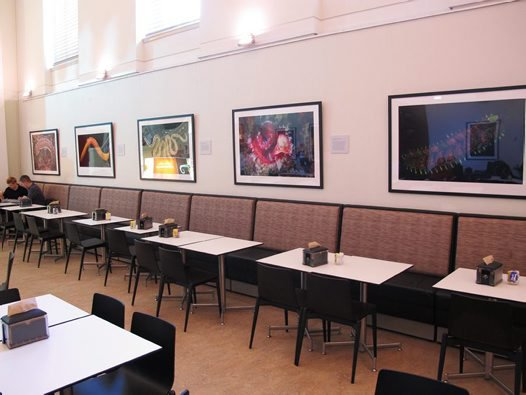 Photographic display of polychaetes at the museum cafeteria.