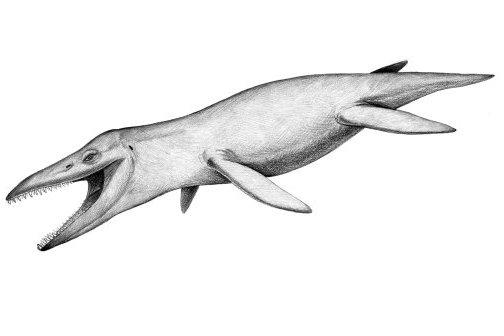 Pliosaur, Kronosaurus queenslandicus
