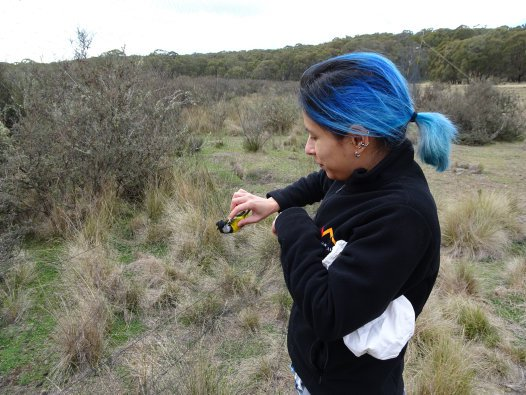 Leah and a Golden Whistler, Coolah Tops, NSW