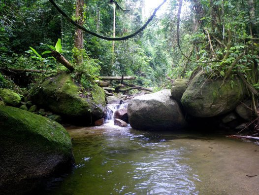 Pu Hoat Nature Reserve, Vietnam