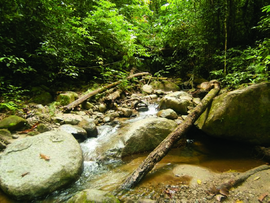 Forest stream at Nantu Forest, Sulawesi, Indonesia.