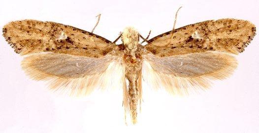 Corpse Fauna - Moths