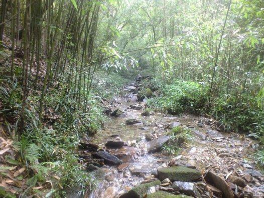 Stream in Maoershan Nature Reserve