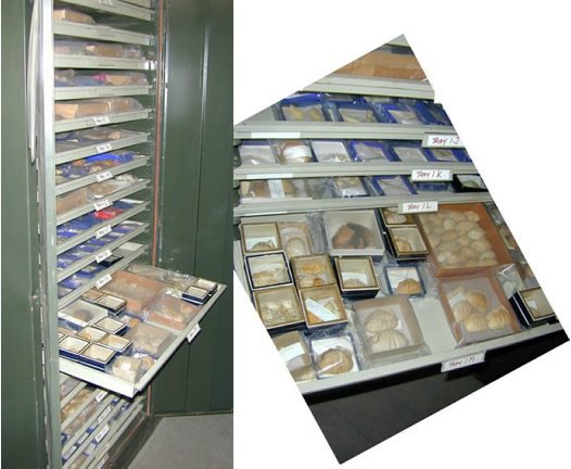Mel Ward crab collection cabinet
