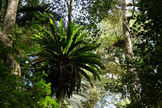 Madagascar 2012 - Montane rainforest