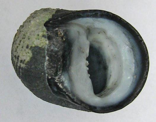 Aperture view of Nerita.
