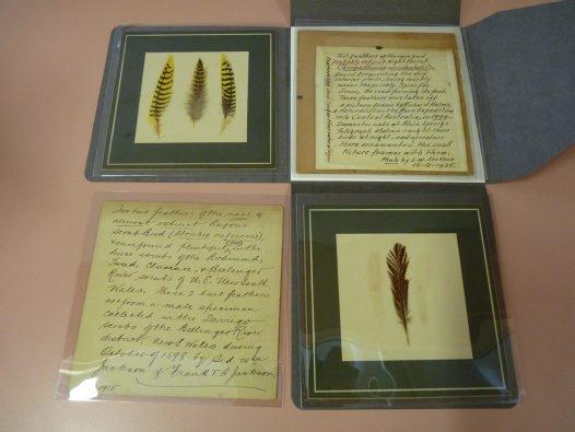 Sidney William Jackson's cards