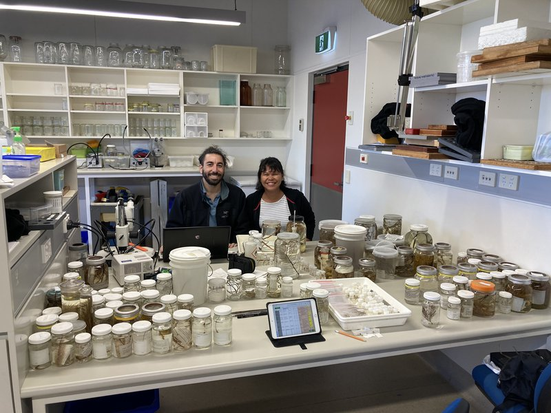 Jeremy Horowitz and Kristina Pahang working on the Australian Museum black coral collection.