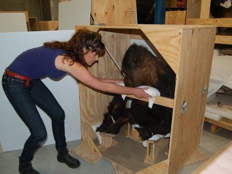 U-haul Gorillas - Packing Primates for a Big Move