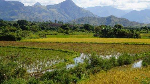 Madagascar 2012 - Rice-padis