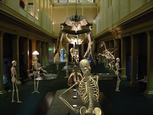 Skeletons visit the museum