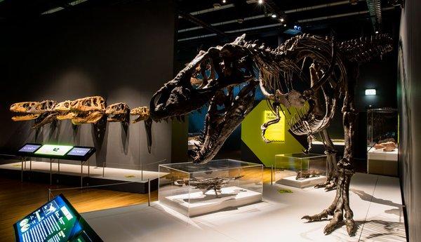 Tyrannosaur exhibition space