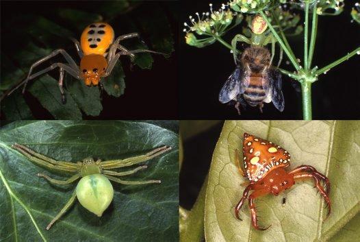 Newly digitised Kodachrome slides of spiders #1