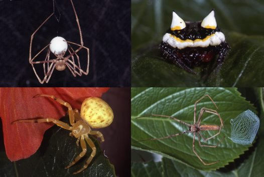 Newly digitised Kodachrome slides of spiders #2