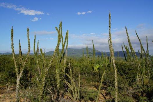 Madagascar 2012 - Spiny Forest