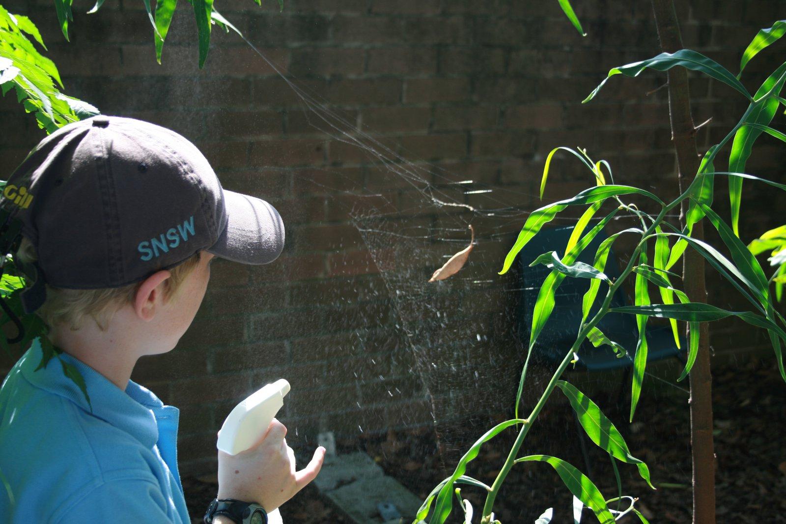 spraying leaf curl spider in Web2spider workshop spraying a leaf curl spider web