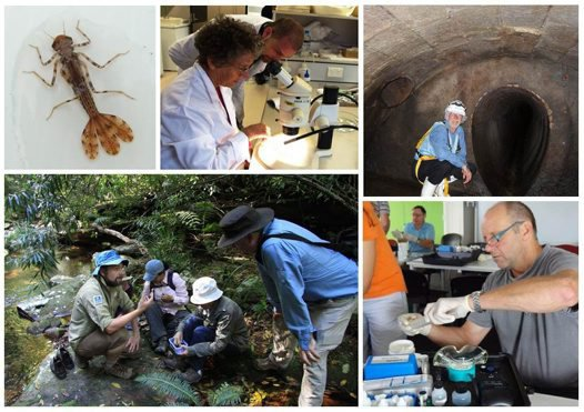 Australian Museum Streamwatch volunteers in 2015