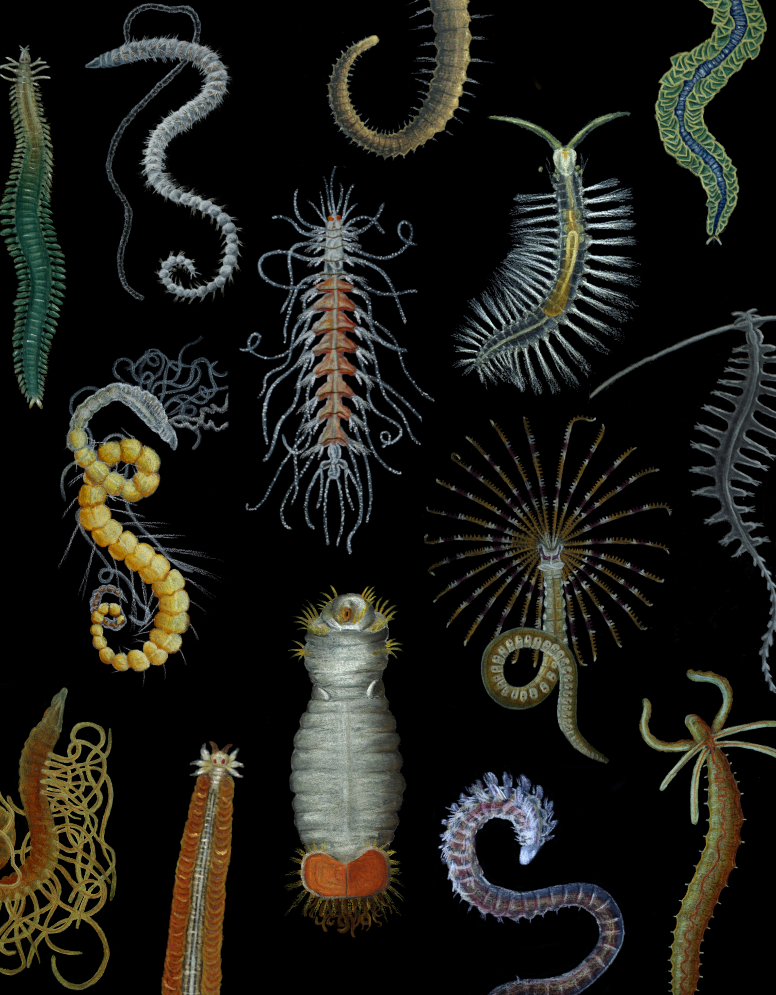 Coloured plate showing the diversity of annelids