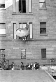 Sunfish at the Australian Museum, 1883 Mola alexandrini