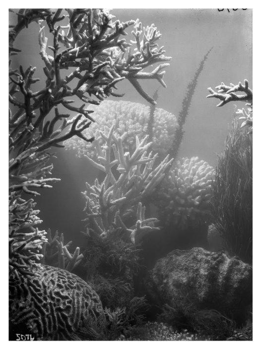 Frank Hurley underwater