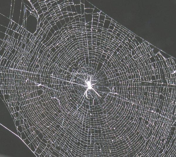 W16 - orb web