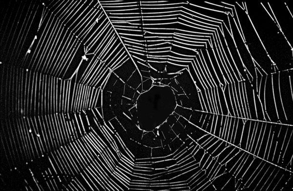 W18 - orb web