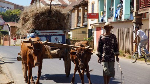 Madagascar 2012- Zebu cart