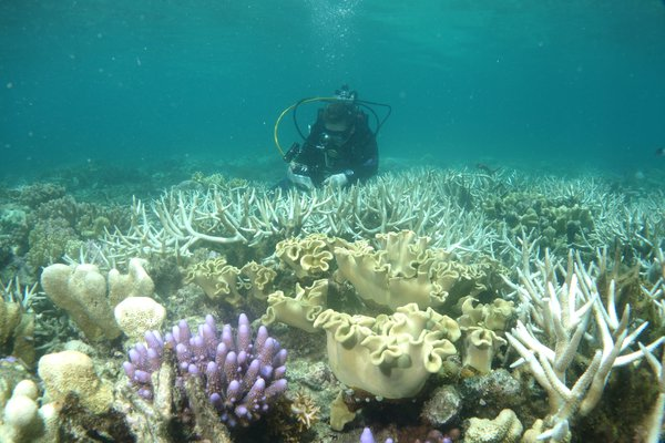 Coral Bleaching research on the Great Barrier Reef at Lizard Island #CapturingClimateChange