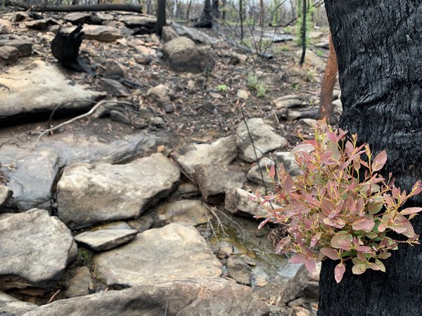 New growth emerges from a landscape scarred by bushfires in summer 2020.