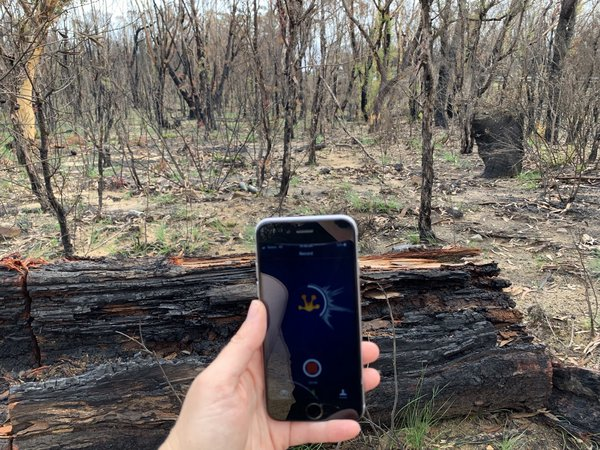 Using FrogID to document frog species in the Blue Mountains. New growth emerges from a landscape scarred by bushfires in summer 2020.